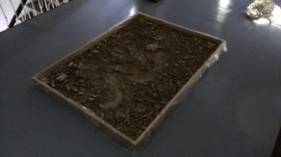 Fragmentos de la caja negra. Performance, concierto de la flora1,Cavernario